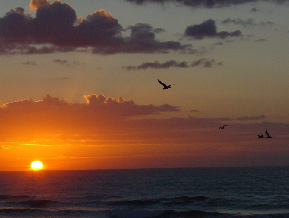 Sunrisegulls_1